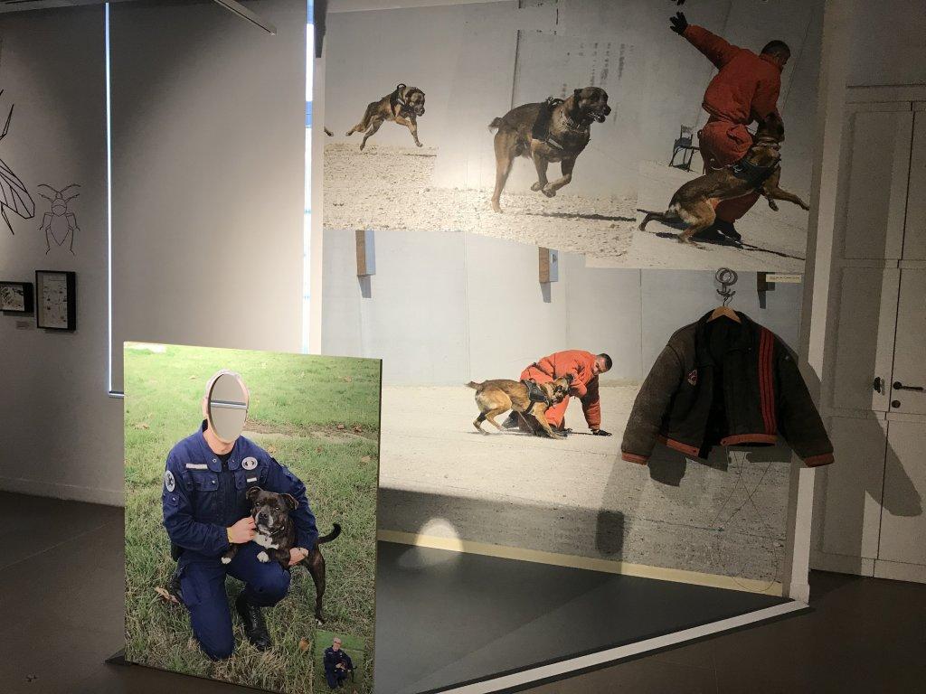 Vue de l'exposition Des animaux et des gendarmes, Musée de la Gnedarmerie nationale, Melun, IDF (28)