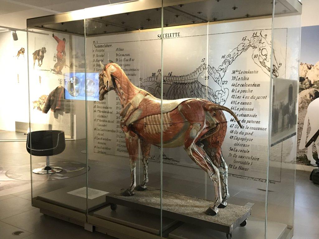 Vue de l'exposition Des animaux et des gendarmes, Musée de la Gnedarmerie nationale, Melun, IDF (3)