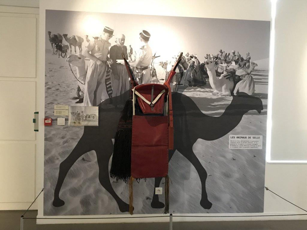 Vue de l'exposition Des animaux et des gendarmes, Musée de la Gnedarmerie nationale, Melun, IDF (7)